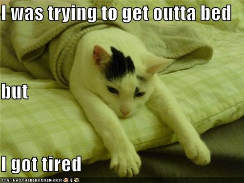funny-pictures-cat-is-tired