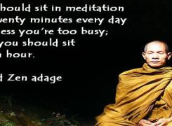 Media, meditation, and monkeys, oh my!